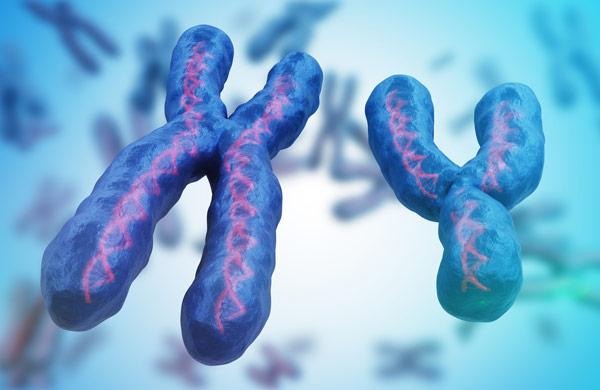 x y chromosomes.
